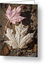 Maple Leaves In Water Greeting Card
