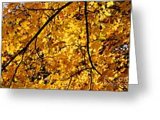 Maple Tree In Yellow Fall Colors Greeting Card