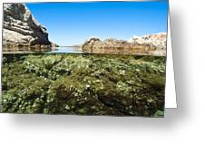 Marine Algae Greeting Card