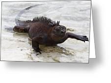 Marine Iguana Galapagos Greeting Card