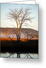 Marsh Tree Reflections Greeting Card