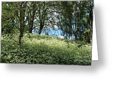 Meadow And Trees In Spring. Vitabergsparken, Stockholm, Sweden. Greeting Card