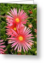 Mesa Verde Ice Plant Greeting Card