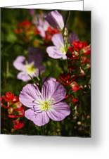 Mexican Primrose  Greeting Card