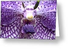 Micro Orchid Greeting Card
