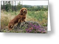 Miniature Long-haired Dachshund Greeting Card