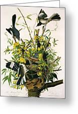 Mocking Birds And Rattlesnake Greeting Card