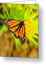 Monarch Butterfly Greeting Card by Carol Toepke