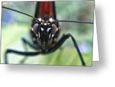 Monarch Stare Greeting Card