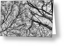 Monochrome Forest Greeting Card