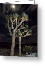 Moon Over Joshua - Joshua Tree National Park In California Greeting Card
