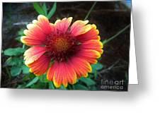 Morning Beauty Greeting Card