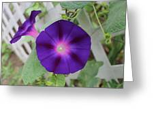 Morning Glory Greeting Card by Victoria Sheldon