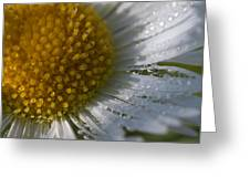Mornings Dew Greeting Card