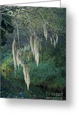 Moss Hanging Over The River Greeting Card