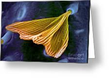 Moth Scale, Sem Greeting Card