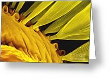 Moth Scales, Sem Greeting Card