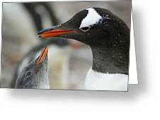 Mother And Chick Gentoo Penguins  Greeting Card