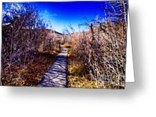 Mountain Creek Path-sundance Utah Greeting Card