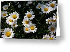Mountain Daisies Greeting Card