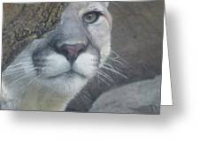 Mountain Lion Painterly Greeting Card