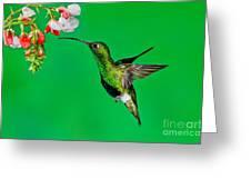Mountain Velvetbreast Greeting Card