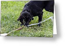 Moving The Hose Greeting Card