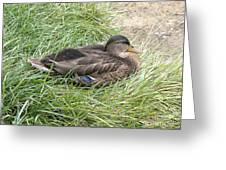 Ms Mallard Greeting Card