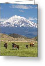 Mt Shasta Cattle Ranch Greeting Card