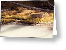 Mule Deer   #3942 Greeting Card