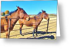 Mule Talk Greeting Card