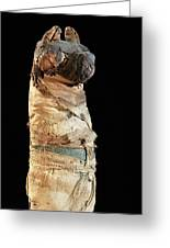 Mummified Dog From Ancient Egypt Greeting Card