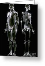 Muscles And Bones Greeting Card