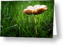 Mushroom Growing Wild On Lawn Greeting Card