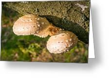 Mushroom On Tree Trunk Greeting Card