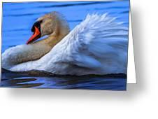 Mute Swan 2 Greeting Card