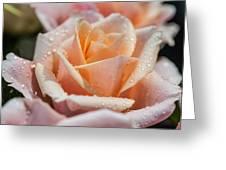 My Birthday Rose 1 Greeting Card