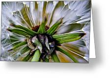 Mystical Magical Dandelion Greeting Card