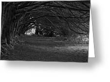 Mystical Yew Trees 1 Greeting Card