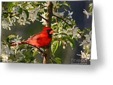 Red Cardinal In Flowers Greeting Card