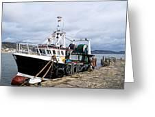 New Seeker - Lyme Regis Greeting Card