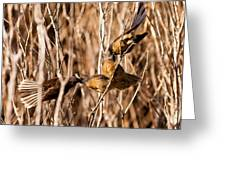 New Zealand Fantail Chicks Being Fed By Parents Greeting Card