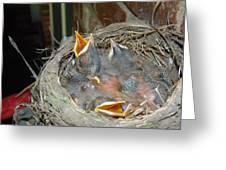 Newborn Robins Greeting Card