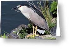 Night Heron Bird Greeting Card by Diane Rada