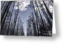 North Woods Forest Greeting Card