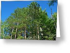 North Woods Tree Line Greeting Card