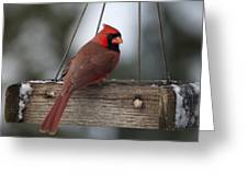 Northern Cardinal Greeting Card by John Kunze