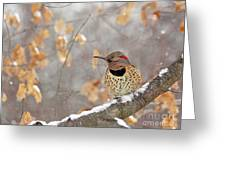 Northern Flicker Woodpecker Greeting Card
