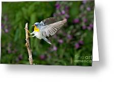 Northern Parula Warbler Greeting Card