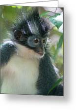 Northern Sumatran Leaf Monkey Greeting Card